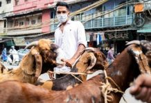 bakri eid file photo